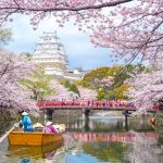 Himeji Castle in Hyogo, Cherry Blossom Viewing Guide