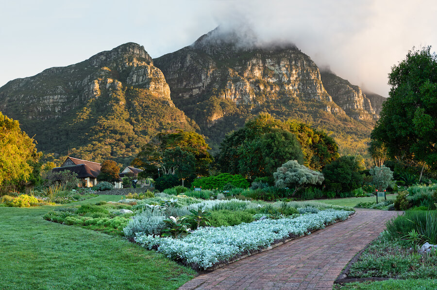 Kirstenbosch at Dawn - Places To Visit