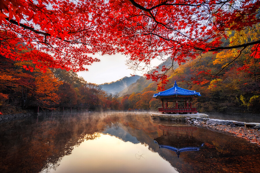 Autumn Maple in Naejangsan national park, South korea - Best places to visit each month of the year