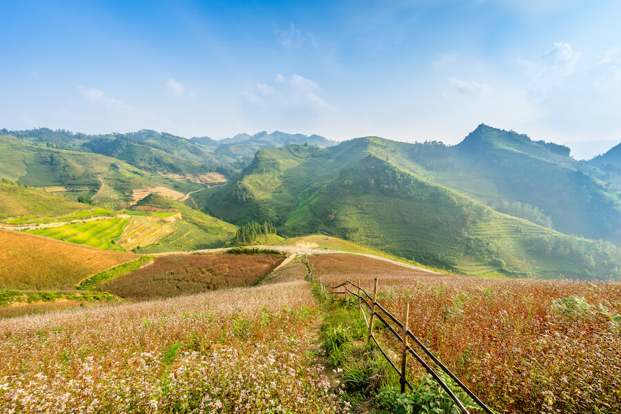 Blooming season in Ha Giang vietnam - Best places to visit each month of the year