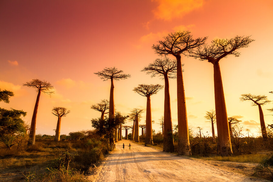 Boabab Alley Sunset Madagascar - Best places to visit each month of the year