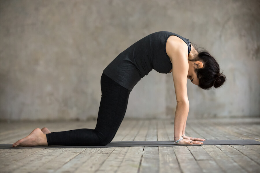 Cat Pose Young Woman - yoga poses for plus-sized women