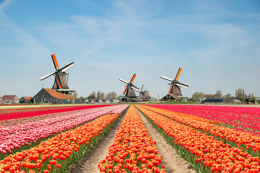 Landscape of Keukenhof Gardens Netherlands bouquet of tulips and windmills in the Netherlands - Best places to visit each month of the year