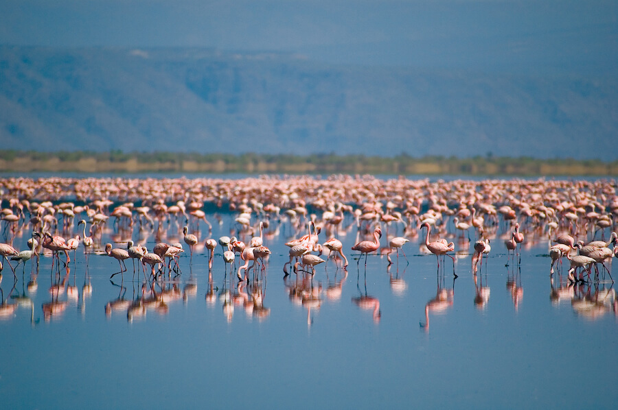 Large group of flamingoes in Natron - Best places to visit each month of the year