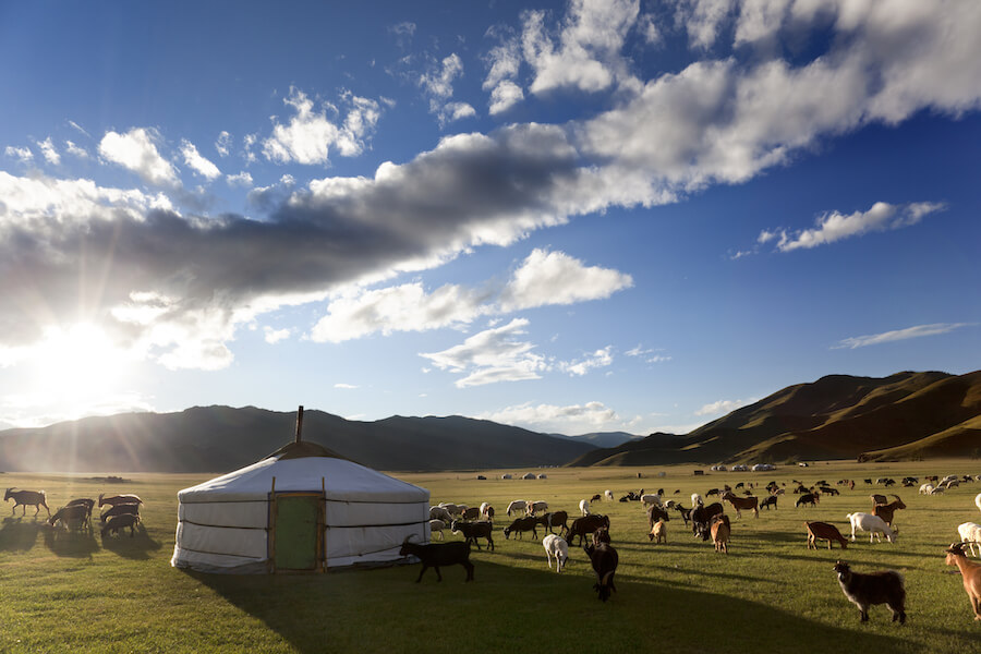 Livestock in a pasture around haystack on partly cloudy day with ger camping mongolia - Best places to visit each month of the year