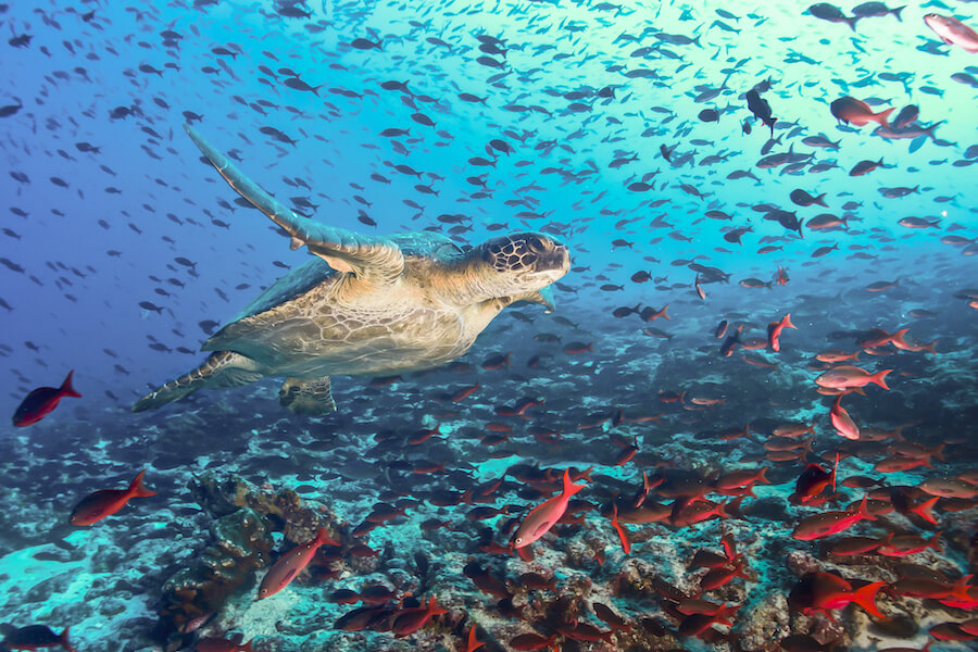 Turtle and tons of fish Galapagos Islands - Best places to visit each month of the year