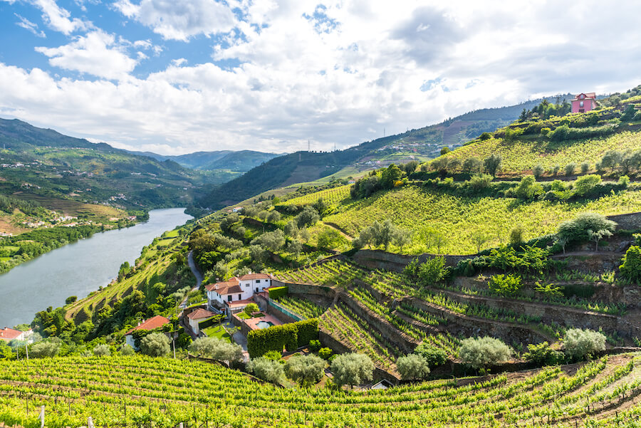 Vineyards and Landscape of the Douro river region in Portugal - Best places to visit each month of the year